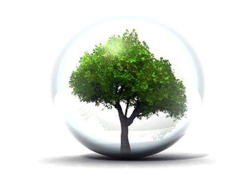 Photo d'un arbre dans une bulle